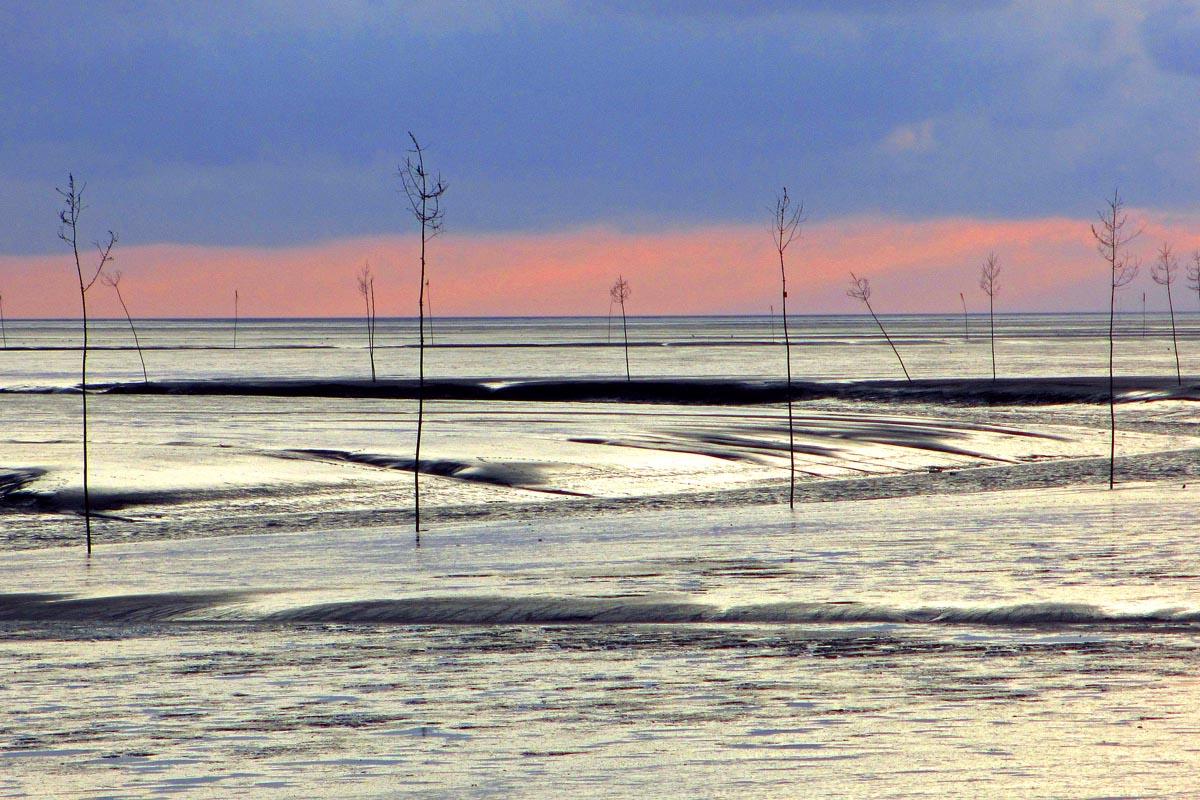 31.7.2020: Deutschland – Wattenmeer