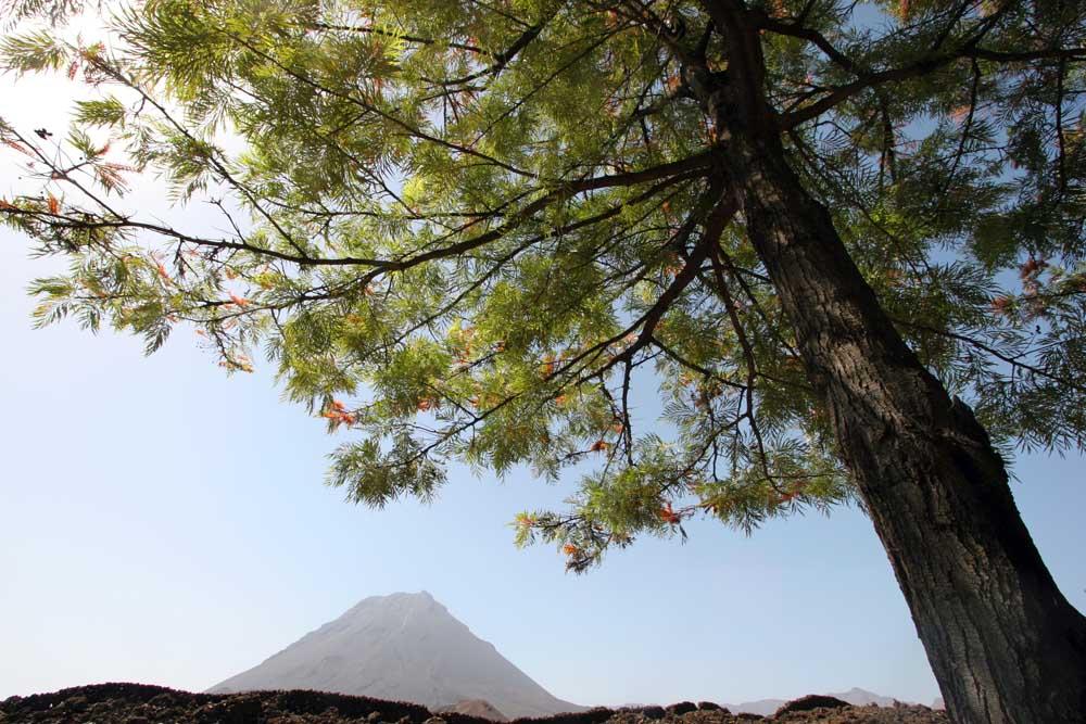 6.8.2020: Kapverdische Inseln – Fogo