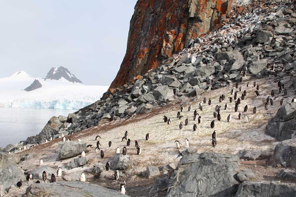 4.8.2020: Antarktis – Half Moon Island